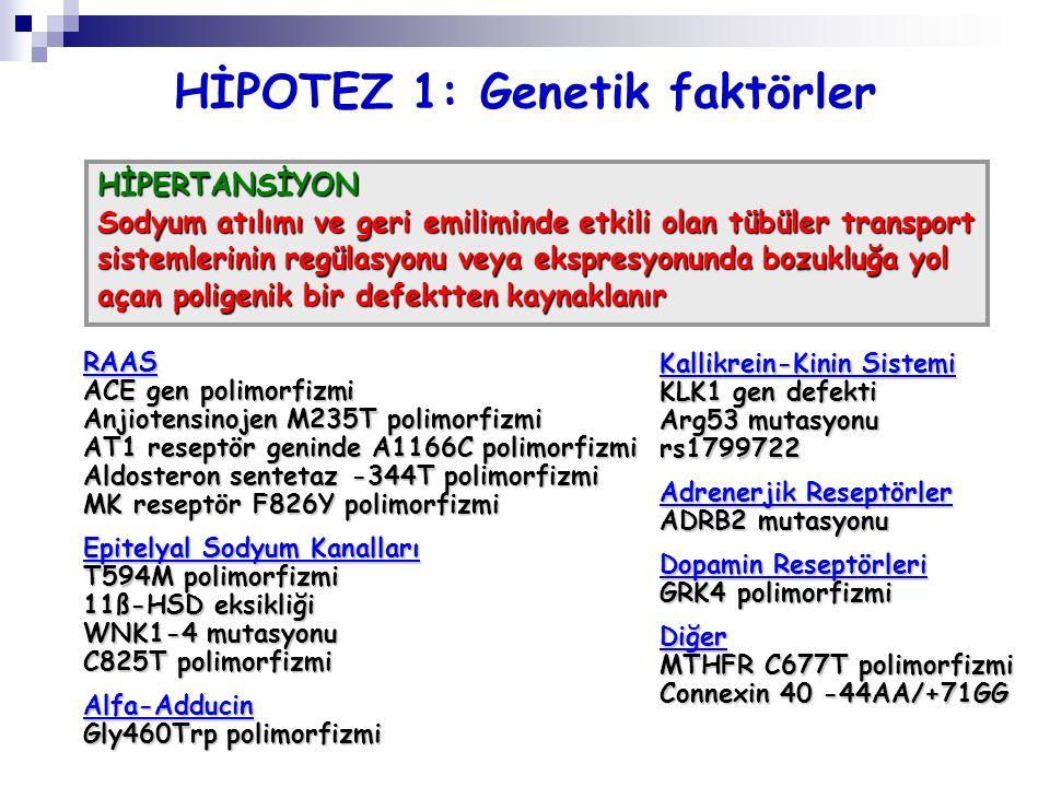 HİPOTEZ 1: Genetik faktörler HİPERTANSİYON Sodyum atılımı ve geri emiliminde etkili olan tübüler transport sistemlerinin regülasyonu veya ekspresyonun