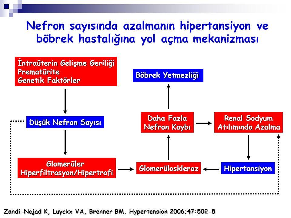 İntraüterin Gelişme Geriliği Prematürite Genetik Faktörler Düşük Nefron Sayısı GlomerülerHiperfiltrasyon/Hipertrofi Glomerüloskleroz Daha Fazla Nefron