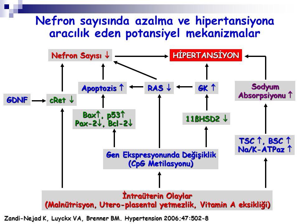 Nefron sayısında azalma ve hipertansiyona aracılık eden potansiyel mekanizmalar İntraüterin Olaylar (Malnütrisyon, Utero-plasental yetmezlik, Vitamin