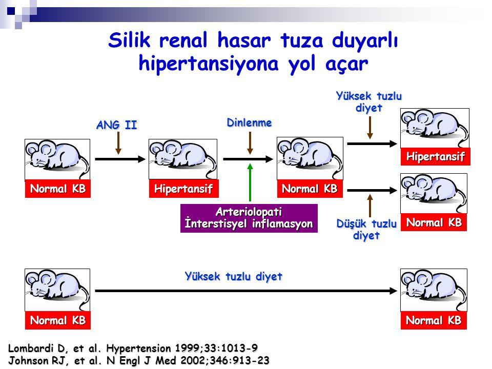Normal KB Hipertansif Hipertansif ANG II Dinlenme Yüksek tuzlu diyet Arteriolopati İnterstisyel inflamasyon Normal KB Silik renal hasar tuza duyarlı h