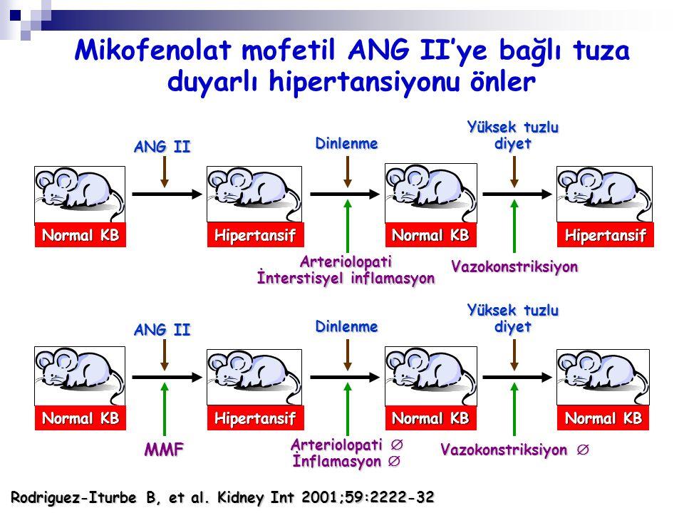 Normal KB Hipertansif Hipertansif ANG II Dinlenme Yüksek tuzlu diyet Arteriolopati İnterstisyel inflamasyon Vazokonstriksiyon Normal KB Hipertansif AN