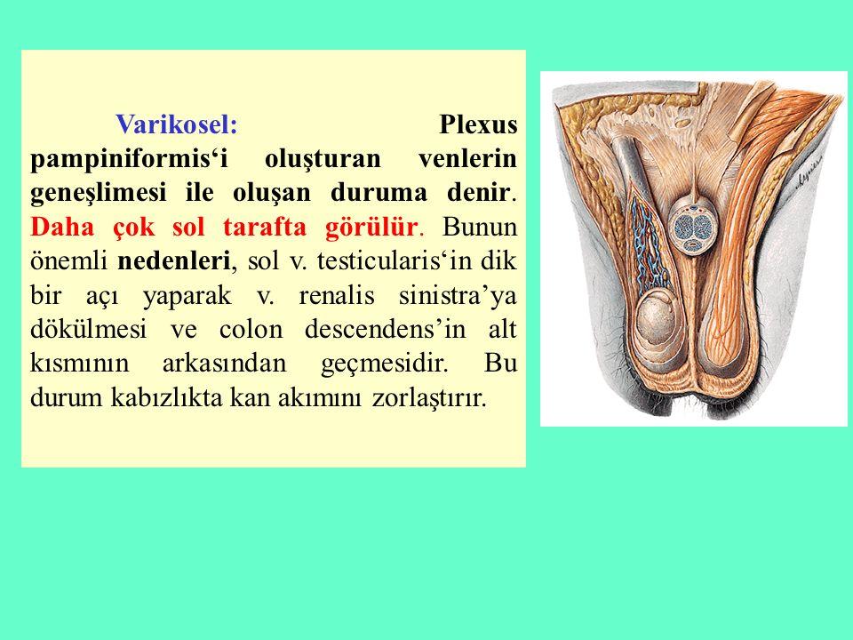 Varikosel: Plexus pampiniformis'i oluşturan venlerin geneşlimesi ile oluşan duruma denir. Daha çok sol tarafta görülür. Bunun önemli nedenleri, sol v.