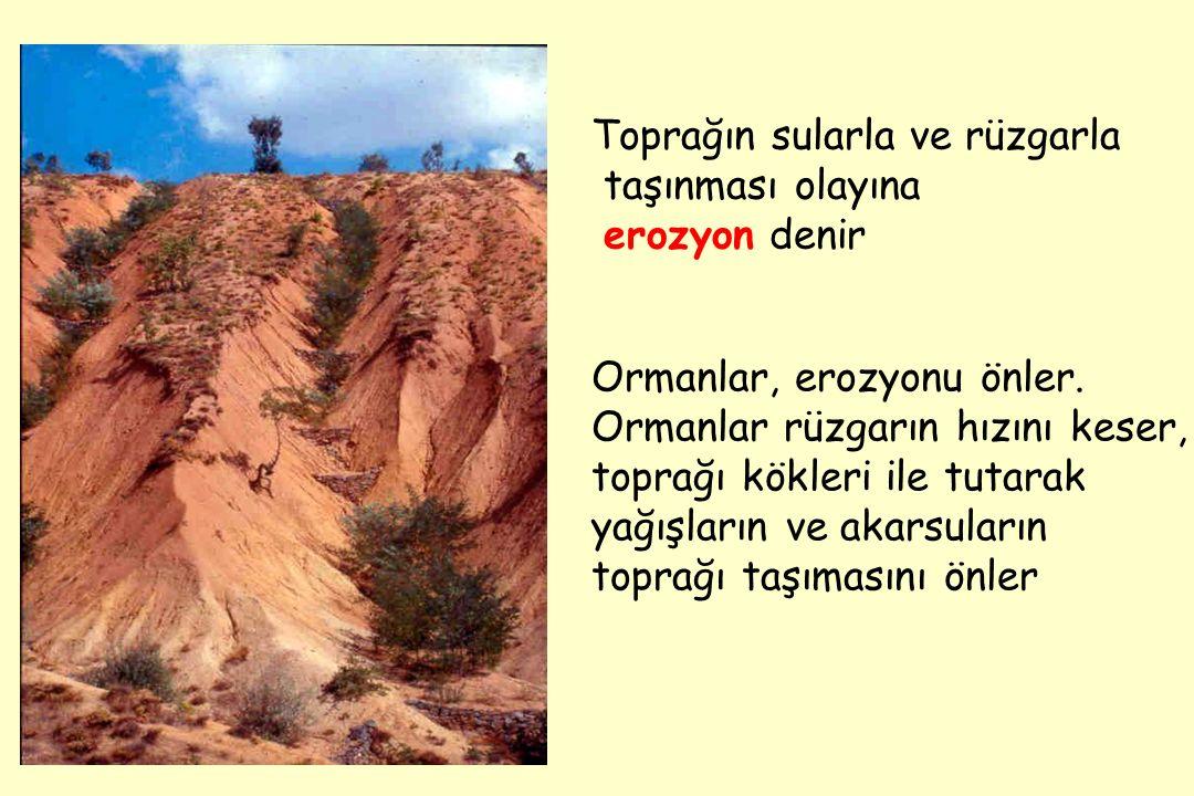 Toprağın sularla ve rüzgarla taşınması olayına erozyon denir Ormanlar, erozyonu önler.
