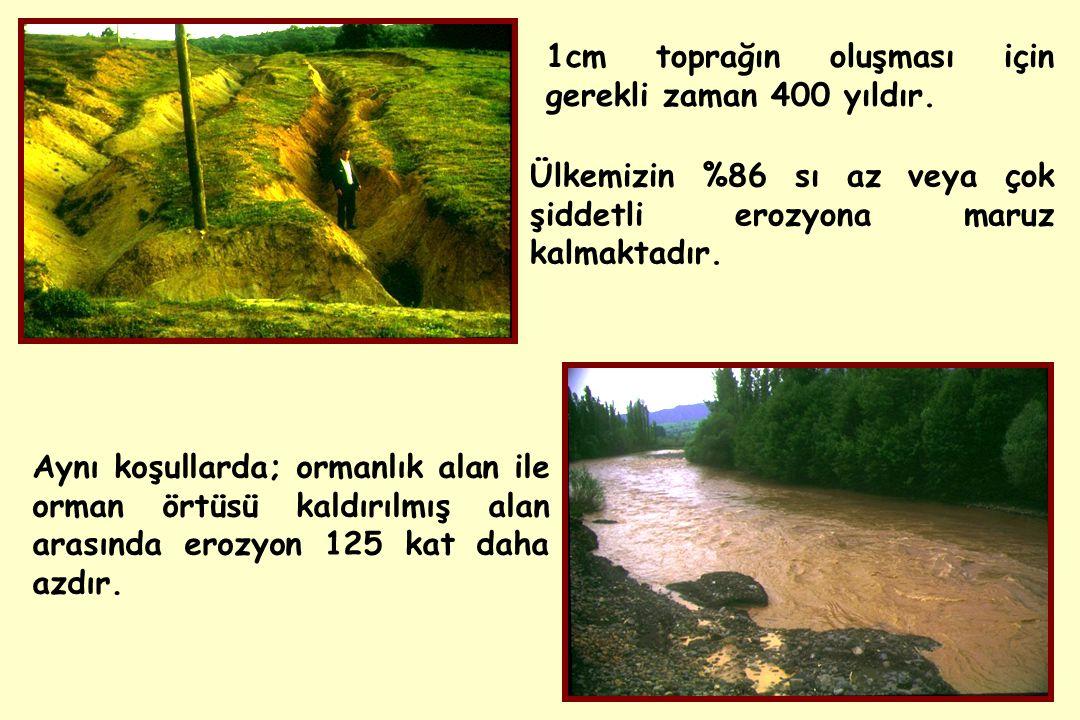 Aynı koşullarda; ormanlık alan ile orman örtüsü kaldırılmış alan arasında erozyon 125 kat daha azdır.