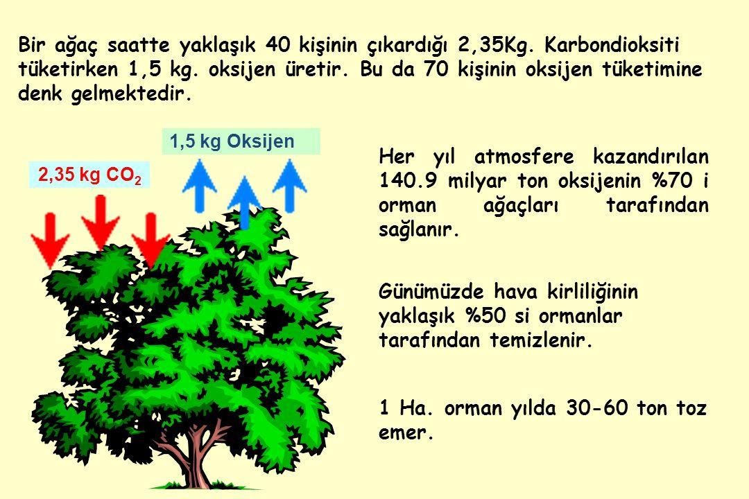 1 Ha.orman yılda 30-60 ton toz emer.