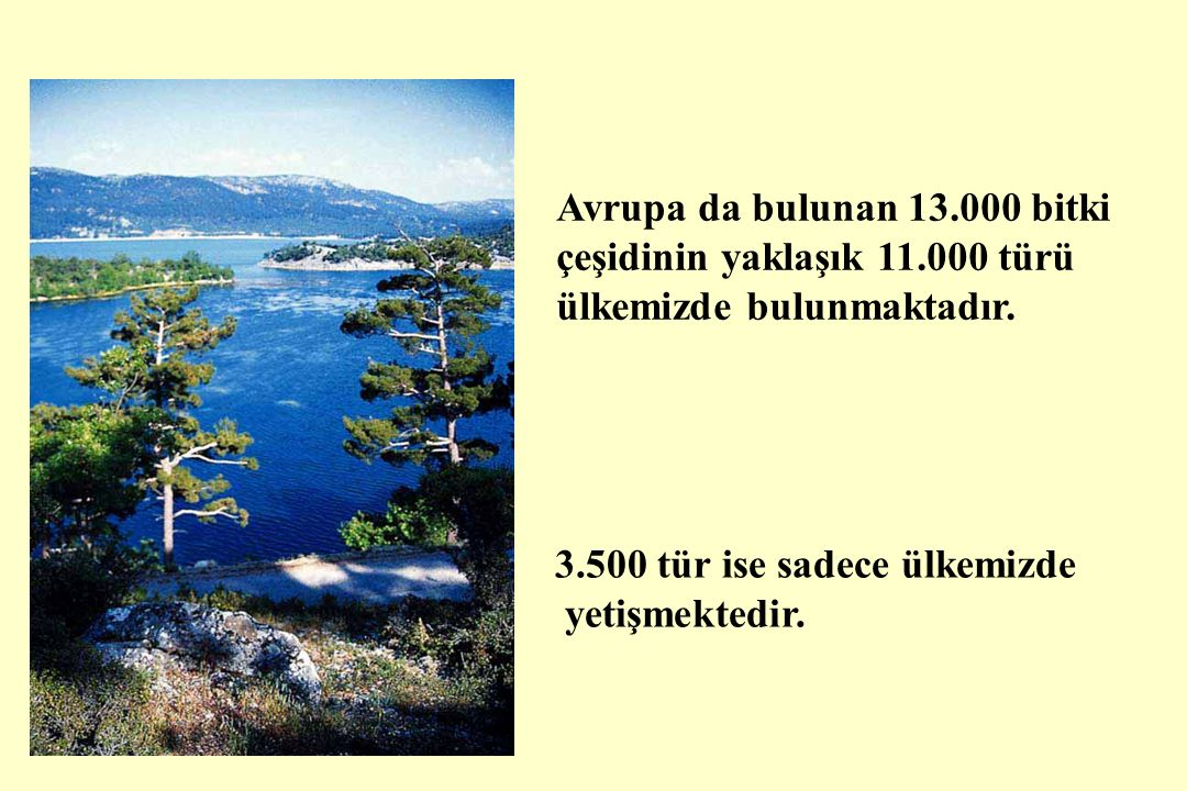 Avrupa da bulunan 13.000 bitki çeşidinin yaklaşık 11.000 türü ülkemizde bulunmaktadır.
