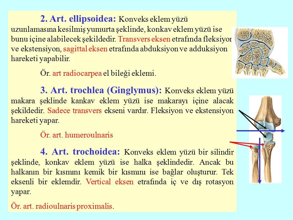 2.Art.