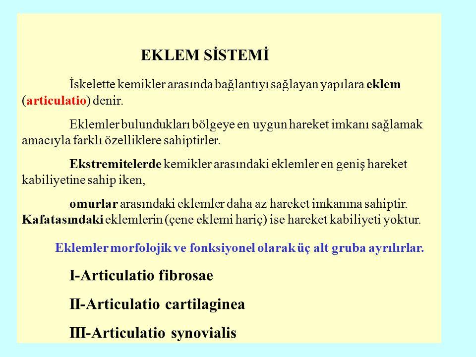 Synovial (tam hareketli) eklemler eksenlerine göre 4 gurupta incelenir.