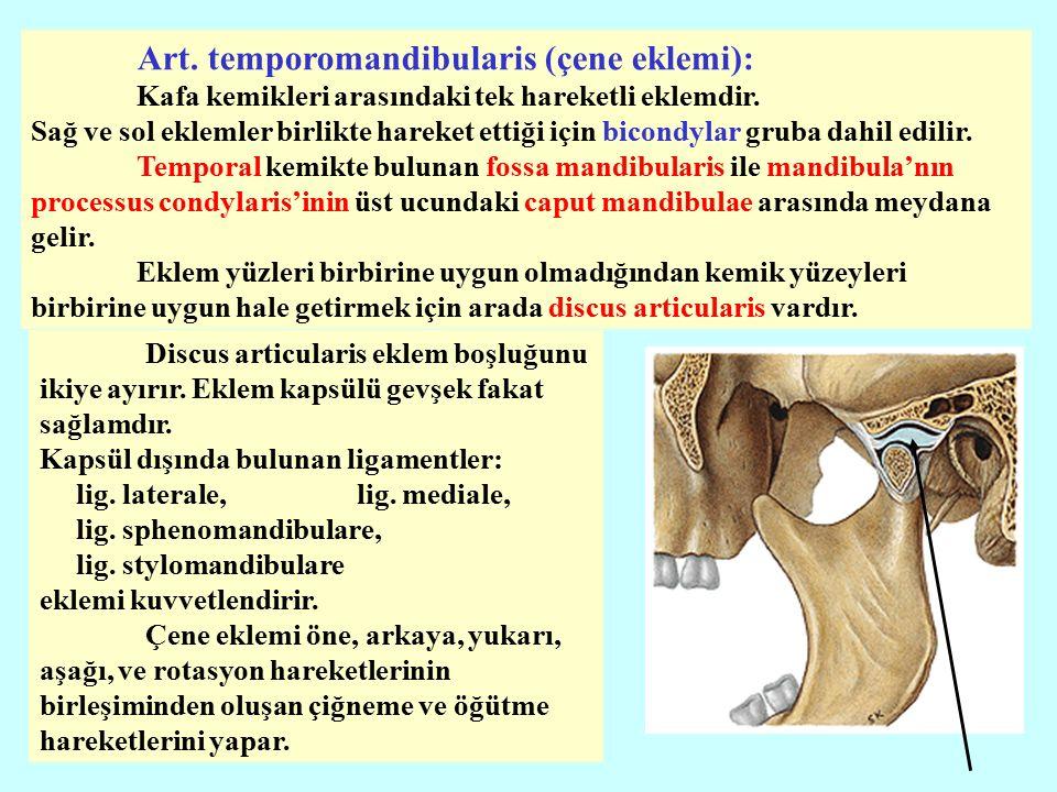 Discus articularis eklem boşluğunu ikiye ayırır.Eklem kapsülü gevşek fakat sağlamdır.