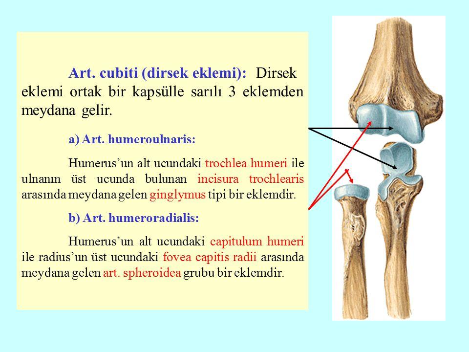 Art.cubiti (dirsek eklemi): Dirsek eklemi ortak bir kapsülle sarılı 3 eklemden meydana gelir.