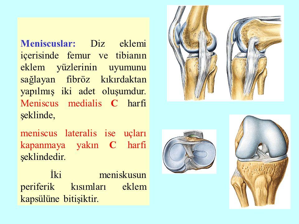 Meniscuslar: Diz eklemi içerisinde femur ve tibianın eklem yüzlerinin uyumunu sağlayan fibröz kıkırdaktan yapılmış iki adet oluşumdur.