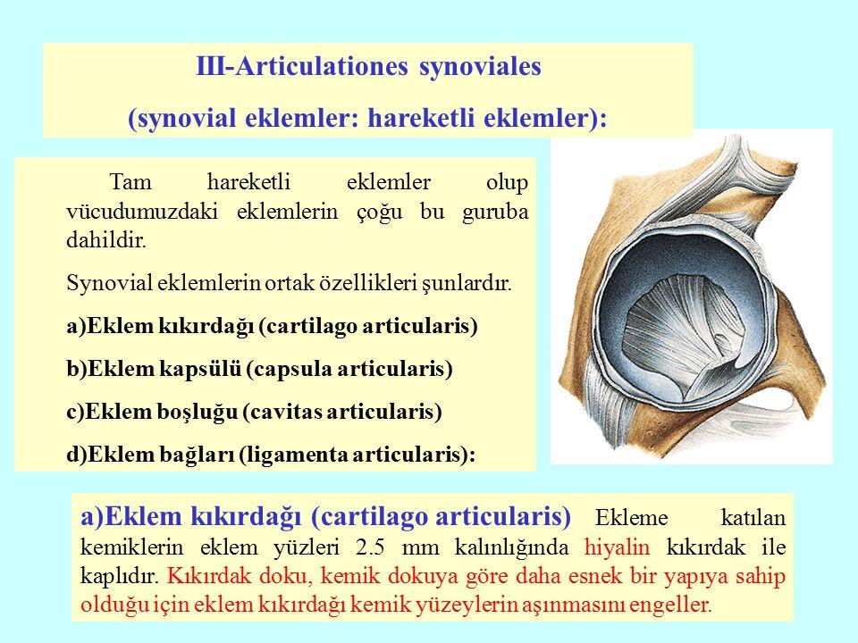b) Eklem kapsülü (capsula articularis): Ekleme katılan kemiklerin eklem kıkırdağı ile kaplı eklem yüzlerini içine alacak şekilde eklemi dıştan kuşatan bağ dokusuna eklem kapsülü denir.