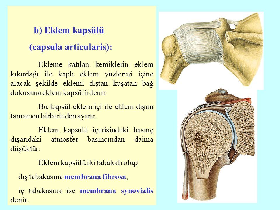 Membrana fibrosa: Eklem kapsülünün dıştaki tabakası olup fibröz bağ dokusundan meydana gelir ve oldukça sağlamdır.