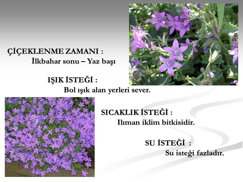ÇİÇEKLENME ZAMANI : İlkbahar sonu – Yaz başı IŞIK İSTEĞİ : Bol ışık alan yerleri sever. SICAKLIK İSTEĞİ : Ilıman iklim bitkisidir. SU İSTEĞİ : Su iste
