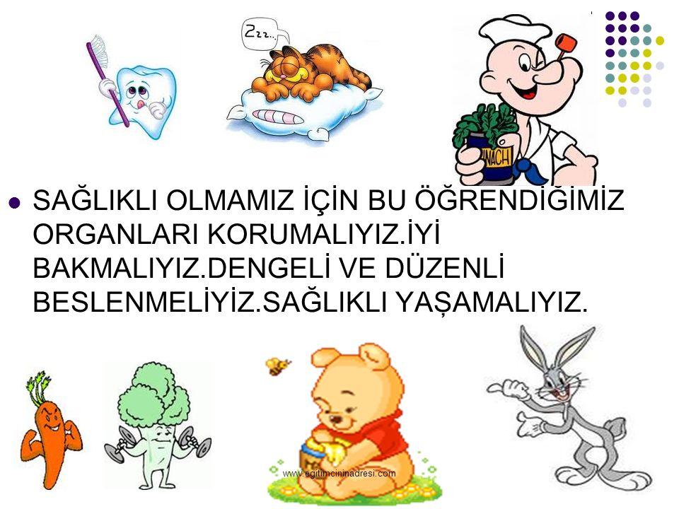DİŞ Yemekleri rahat bir biçimde yememize yarar. www.egitimcininadresi.com