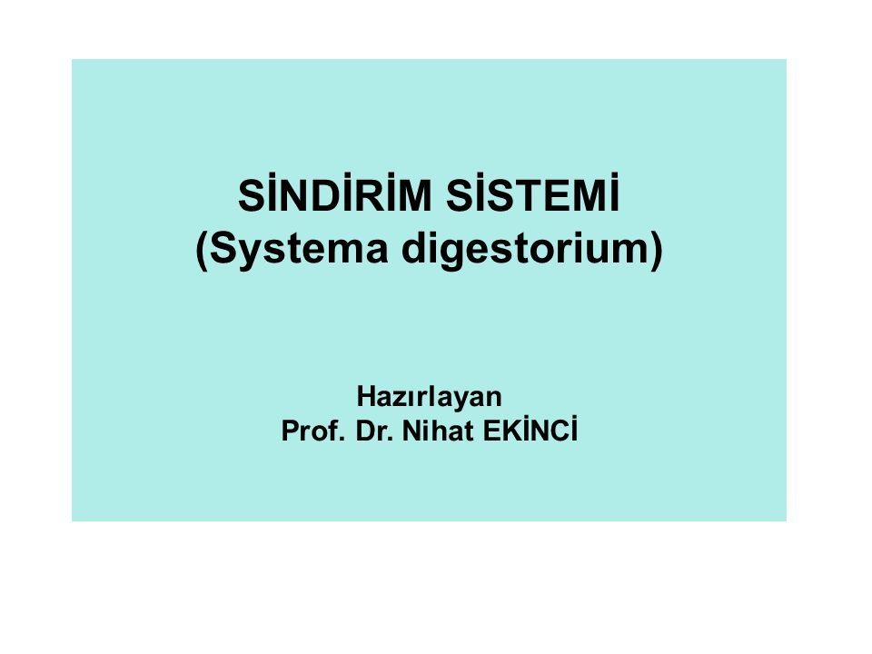 SİNDİRİM SİSTEMİ (Systema digestorium) Hazırlayan Prof. Dr. Nihat EKİNCİ
