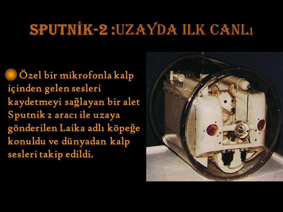 SPUTN İ K-2 :uzayda ilk canl ı Özel bir mikrofonla kalp içinden gelen sesleri kaydetmeyi sa ğ layan bir alet Sputnik 2 aracı ile uzaya gönderilen Laika adlı köpe ğ e konuldu ve dünyadan kalp sesleri takip edildi.