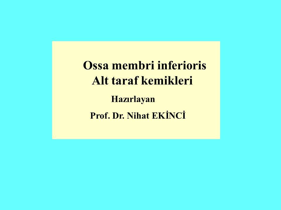 Ossa membri inferioris Alt taraf kemikleri Alt taraf kemikleri toplam 62 adettir.