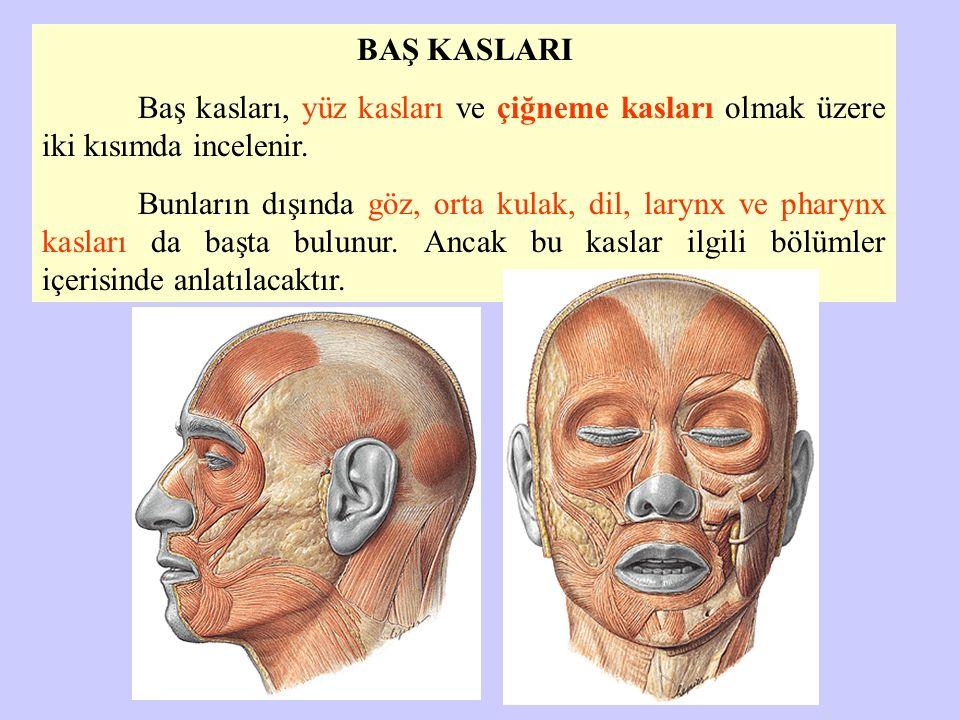 BAŞ KASLARI Baş kasları, yüz kasları ve çiğneme kasları olmak üzere iki kısımda incelenir. Bunların dışında göz, orta kulak, dil, larynx ve pharynx ka