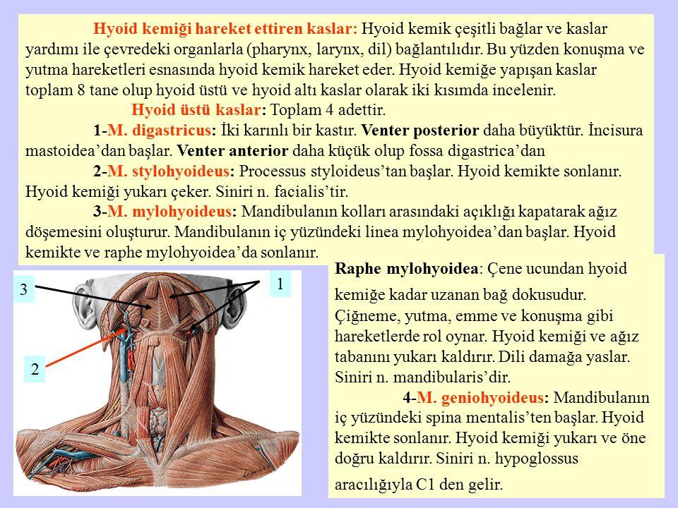 Hyoid kemiği hareket ettiren kaslar: Hyoid kemik çeşitli bağlar ve kaslar yardımı ile çevredeki organlarla (pharynx, larynx, dil) bağlantılıdır. Bu yü