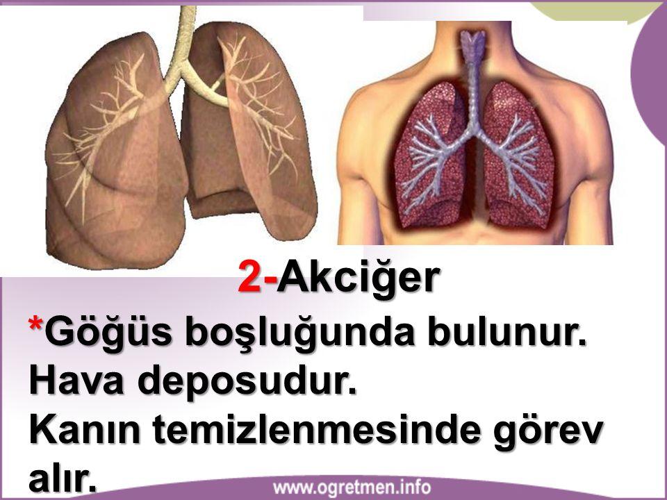 2-Akciğer *Göğüs boşluğunda bulunur. Hava deposudur. Kanın temizlenmesinde görev alır.