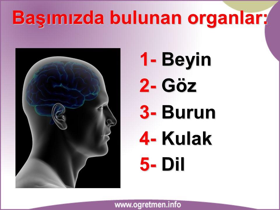 Başımızda bulunan organlar: 1- Beyin 2- Göz 3- Burun 4- Kulak 5- Dil