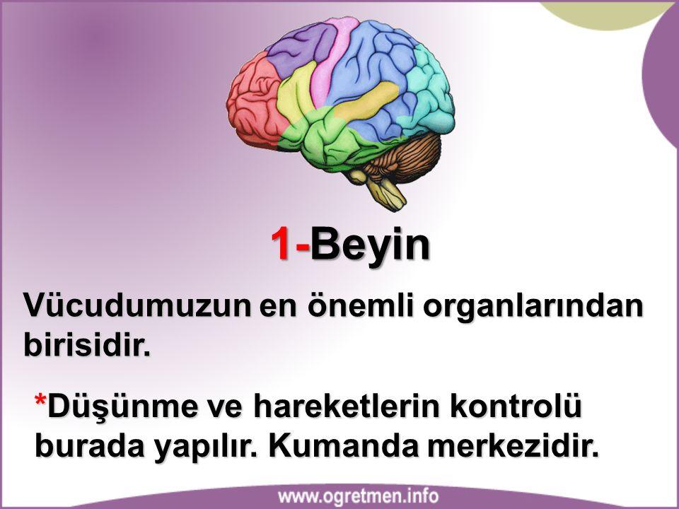 1-Beyin Vücudumuzun en önemli organlarından birisidir. *Düşünme ve hareketlerin kontrolü burada yapılır. Kumanda merkezidir.