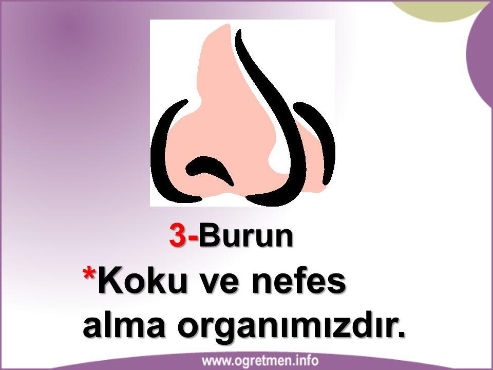 3-Burun *Koku ve nefes alma organımızdır.