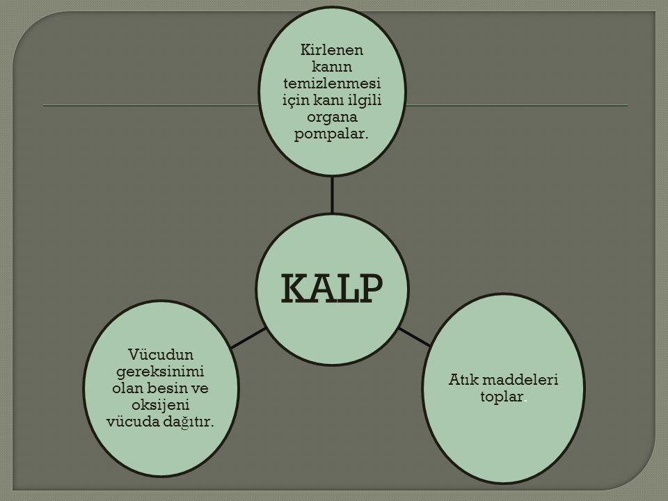 KALP Kirlenen kanın temizlenmesi için kanı ilgili organa pompalar.