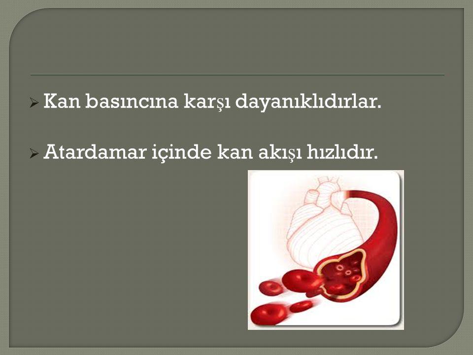  Kan basıncına kar ş ı dayanıklıdırlar.  Atardamar içinde kan akı ş ı hızlıdır.