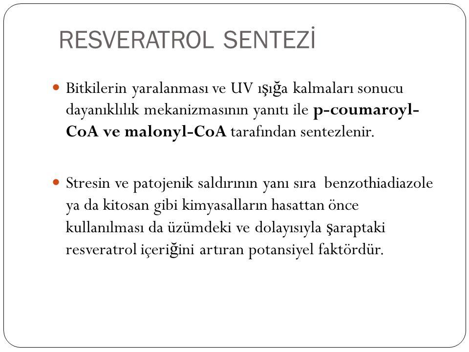 RESVERATROL SENTEZİ Bitkilerin yaralanması ve UV ı ş ı ğ a kalmaları sonucu dayanıklılık mekanizmasının yanıtı ile p-coumaroyl- CoA ve malonyl-CoA tar