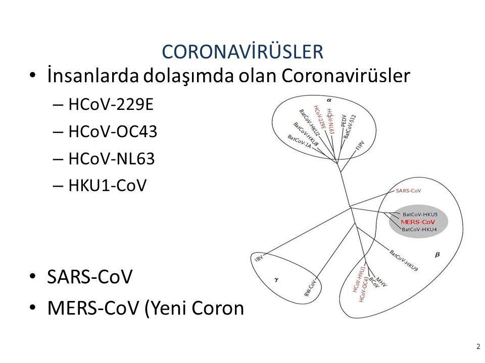 CORONAVİRÜSLER İnsanlarda dolaşımda olan Coronavirüsler – HCoV-229E – HCoV-OC43 – HCoV-NL63 – HKU1-CoV SARS-CoV MERS-CoV (Yeni Coronavirüs) 2