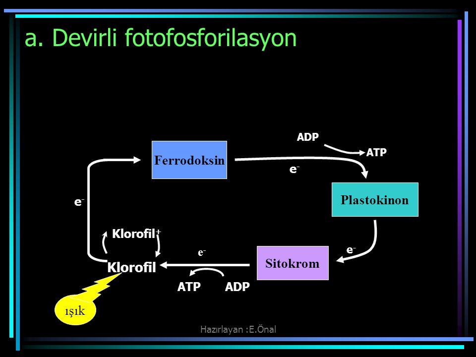 Hazırlayan :E.Önal a. Devirli fotofosforilasyon ışık ADP ATP e - Klorofil + e - Klorofil ATP ADP Ferrodoksin Plastokinon Sitokrom e-e-