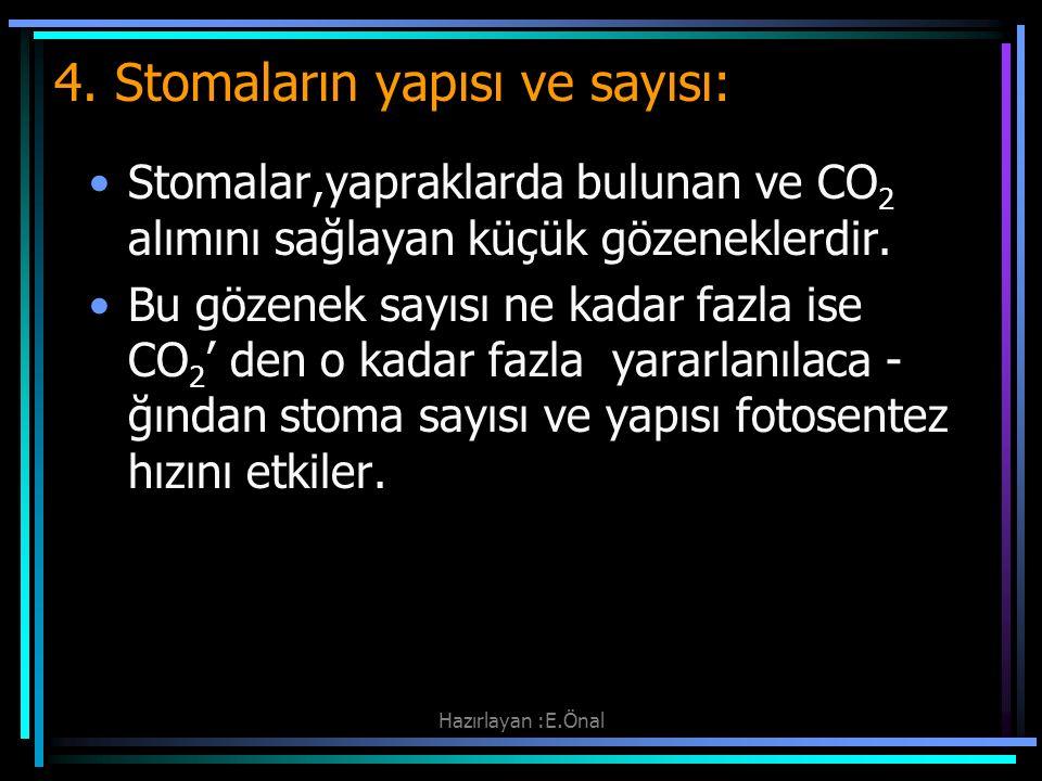 Hazırlayan :E.Önal 4. Stomaların yapısı ve sayısı: Stomalar,yapraklarda bulunan ve CO 2 alımını sağlayan küçük gözeneklerdir. Bu gözenek sayısı ne kad