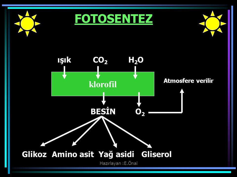 Hazırlayan :E.Önal FOTOSENTEZ ışıkCO 2 H2OH2O klorofil BESİNO2O2 Atmosfere verilir GlikozAmino asitYağ asidiGliserol