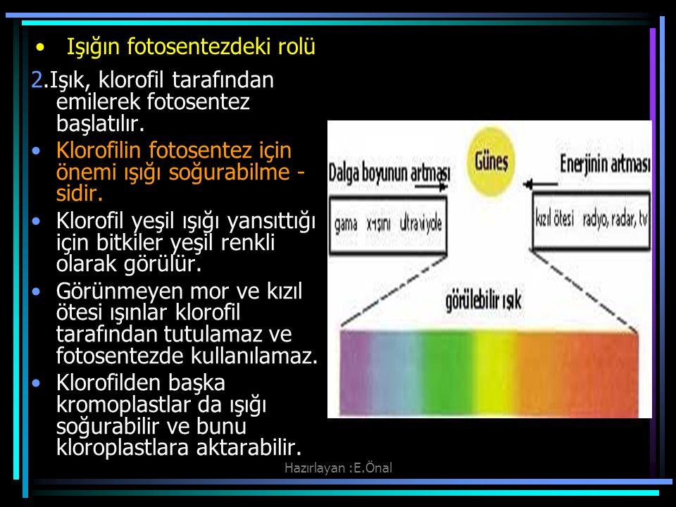 Hazırlayan :E.Önal Işığın fotosentezdeki rolü 2.Işık, klorofil tarafından emilerek fotosentez başlatılır. Klorofilin fotosentez için önemi ışığı soğur