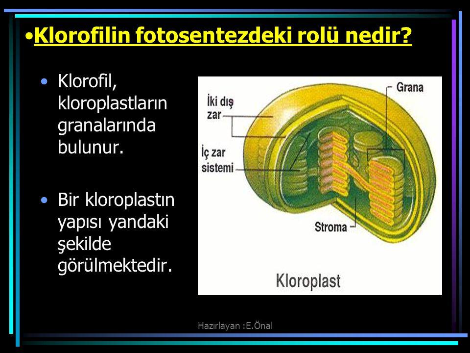 Hazırlayan :E.Önal Klorofilin fotosentezdeki rolü nedir? Klorofil, kloroplastların granalarında bulunur. Bir kloroplastın yapısı yandaki şekilde görül
