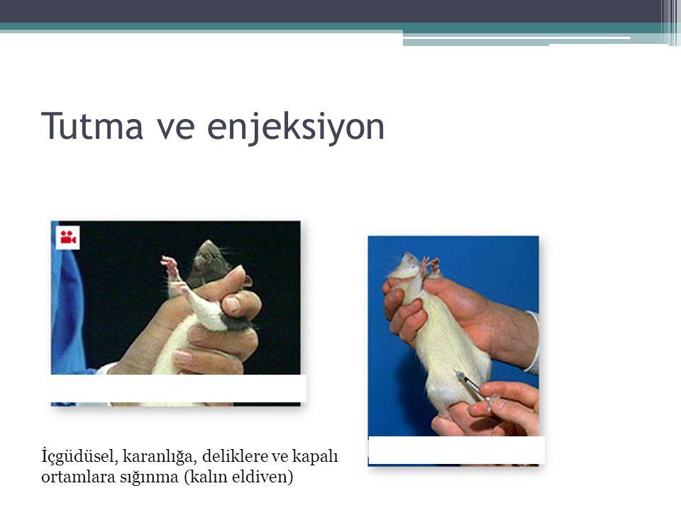 Tutma ve enjeksiyon İçgüdüsel, karanlığa, deliklere ve kapalı ortamlara sığınma (kalın eldiven)
