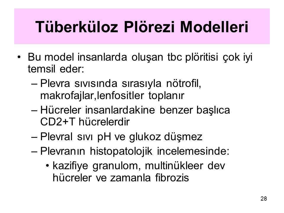 28 Tüberküloz Plörezi Modelleri Bu model insanlarda oluşan tbc plöritisi çok iyi temsil eder: –Plevra sıvısında sırasıyla nötrofil, makrofajlar,lenfos