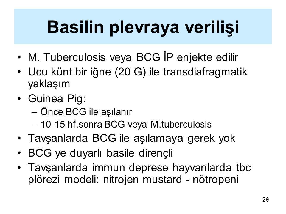 29 Basilin plevraya verilişi M. Tuberculosis veya BCG İP enjekte edilir Ucu künt bir iğne (20 G) ile transdiafragmatik yaklaşım Guinea Pig: –Önce BCG