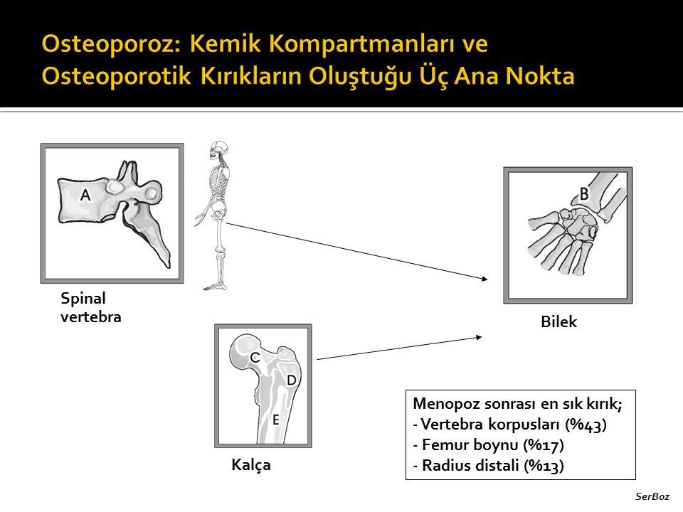 Spinal vertebra Kalça Bilek Menopoz sonrası en sık kırık; - Vertebra korpusları (%43) - Femur boynu (%17) - Radius distali (%13) SerBoz