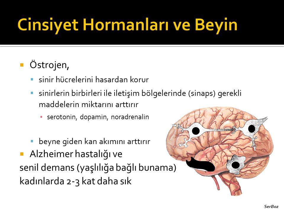  Östrojen,  sinir hücrelerini hasardan korur  sinirlerin birbirleri ile iletişim bölgelerinde (sinaps) gerekli maddelerin miktarını arttırır ▪ sero
