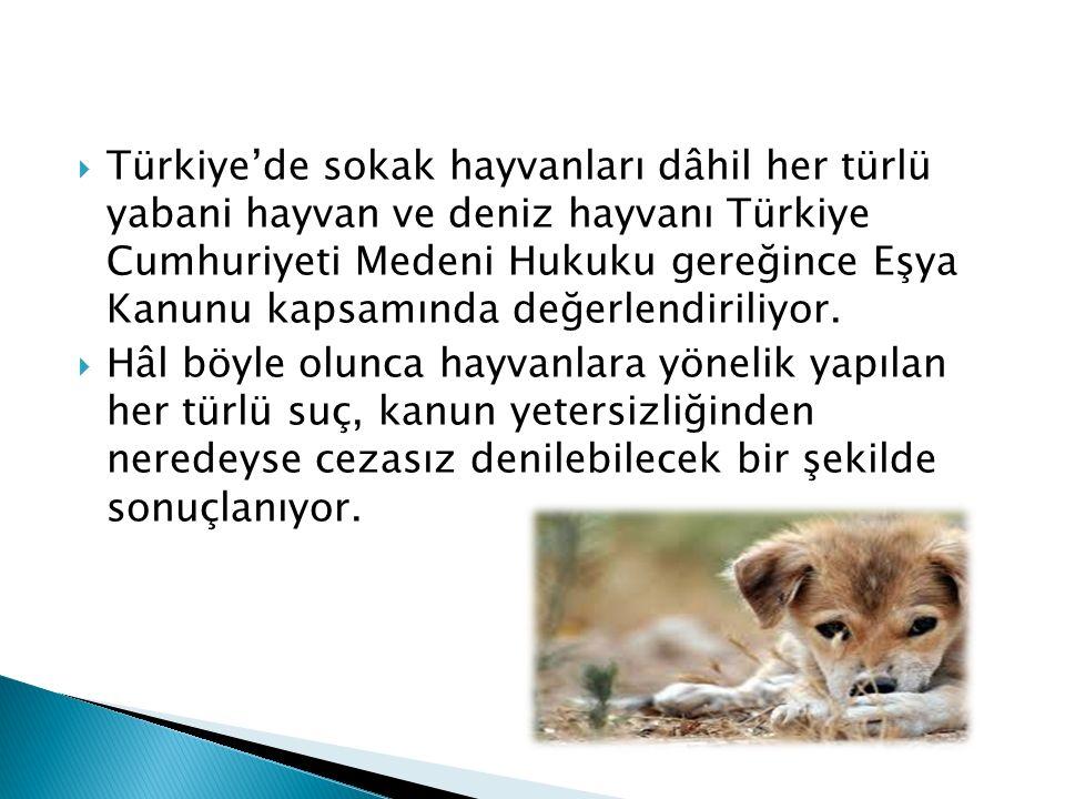  Türkiye'de sokak hayvanları dâhil her türlü yabani hayvan ve deniz hayvanı Türkiye Cumhuriyeti Medeni Hukuku gereğince Eşya Kanunu kapsamında değerlendiriliyor.