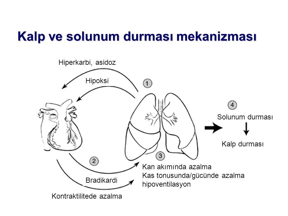 Kalp ve solunum durması mekanizması Hiperkarbi, asidoz Kan akımında azalma Kas tonusunda/gücünde azalma hipoventilasyon Solunum durması Bradikardi Kal