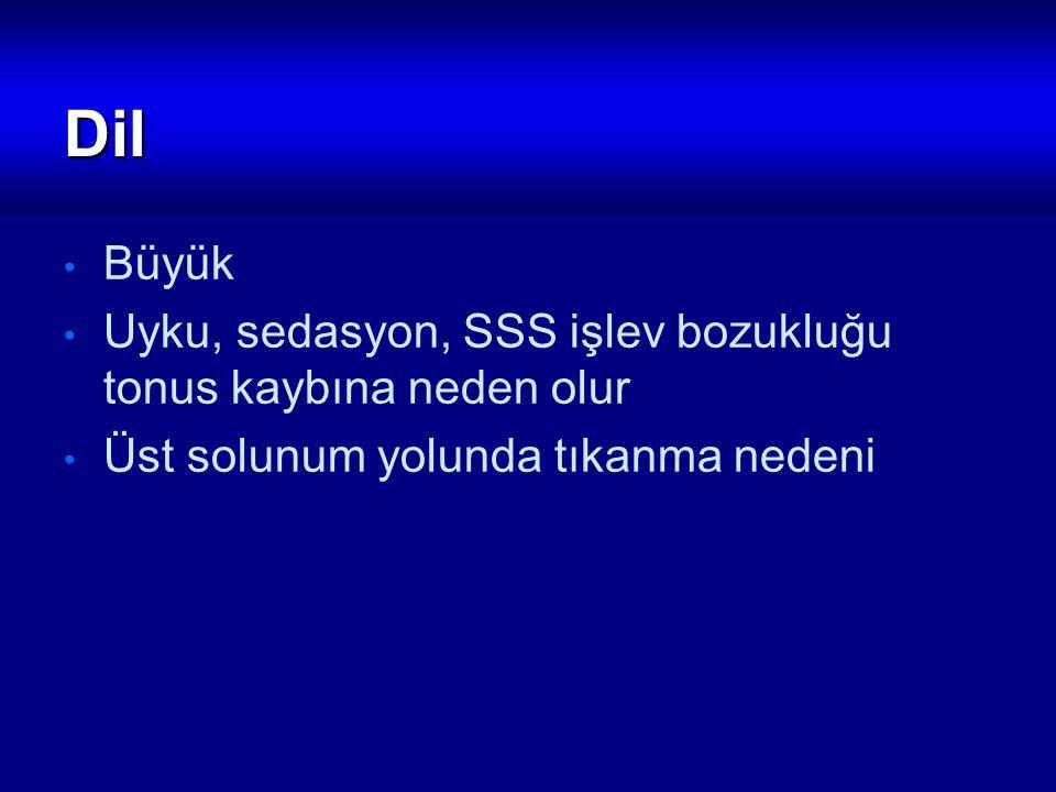 B- Solunum