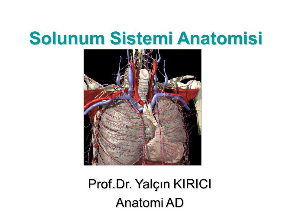 Solunum Sistemi Anatomisi Prof.Dr. Yalçın KIRICI Anatomi AD
