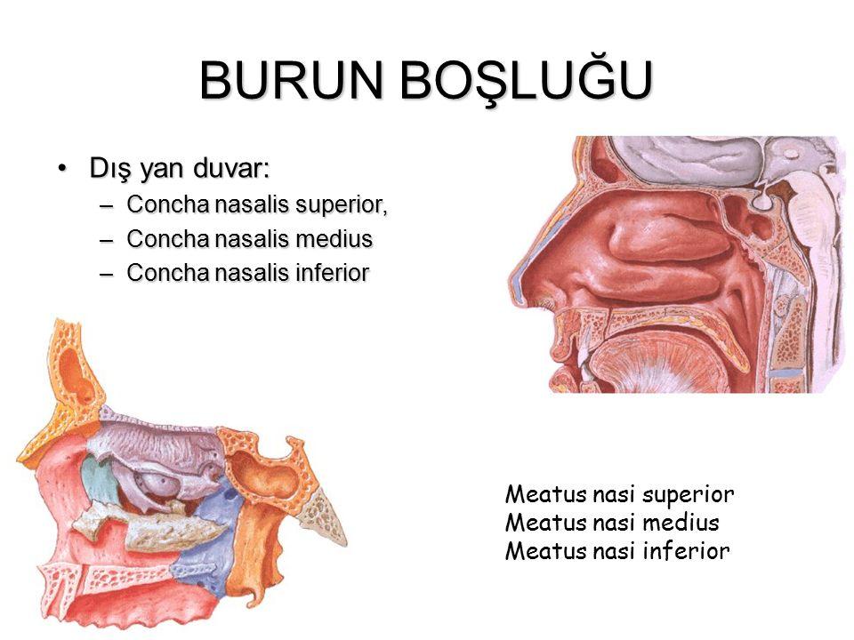 BURUN BOŞLUĞU Dış yan duvar:Dış yan duvar: –Concha nasalis superior, –Concha nasalis medius –Concha nasalis inferior Meatus naMeatus na Meatus nasi su