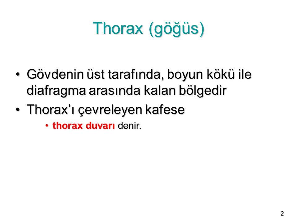 2 Thorax (göğüs) Gövdenin üst tarafında, boyun kökü ile diafragma arasında kalan bölgedirGövdenin üst tarafında, boyun kökü ile diafragma arasında kal
