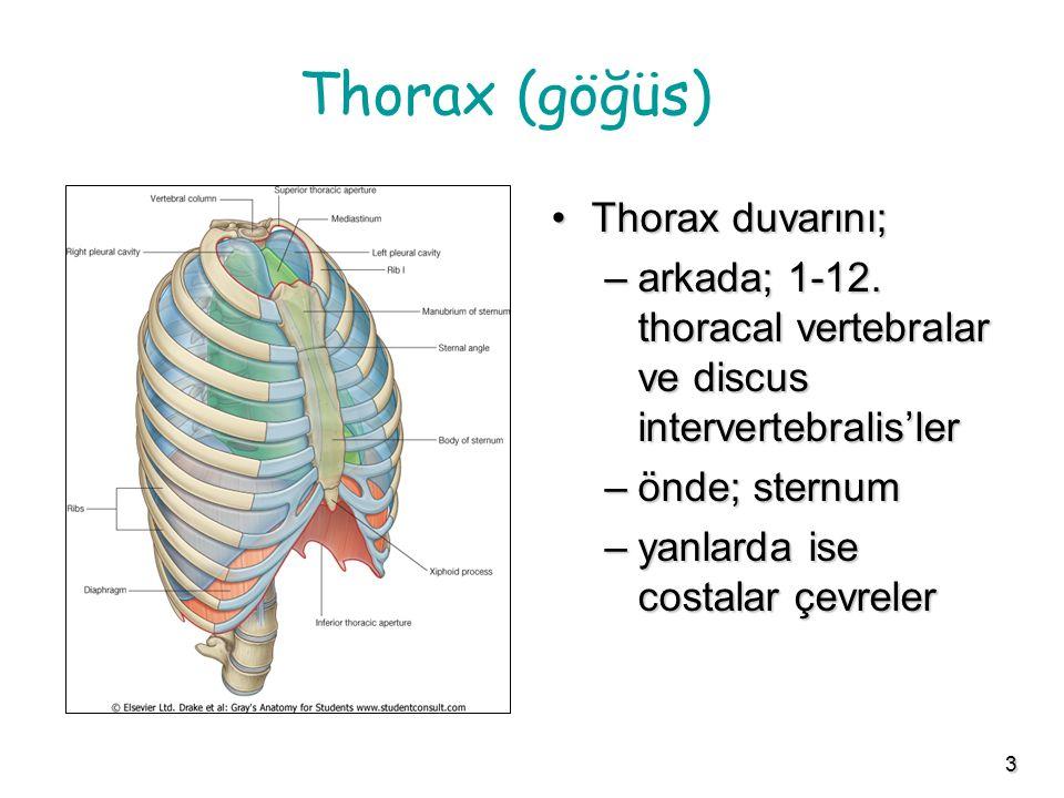 3 Thorax (göğüs) Thorax duvarını;Thorax duvarını; –arkada; 1-12. thoracal vertebralar ve discus intervertebralis'ler –önde; sternum –yanlarda ise cost