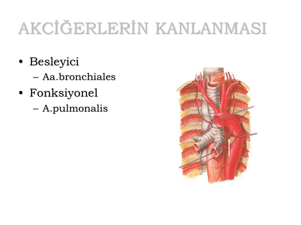 AKCİĞERLERİN KANLANMASI BesleyiciBesleyici –Aa.bronchiales FonksiyonelFonksiyonel –A.pulmonalis